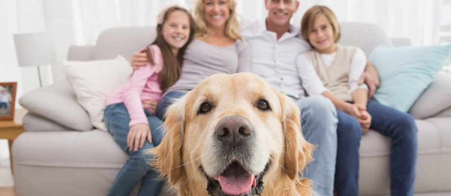 4 Ways To Make Your Family More Comfortable Immediately