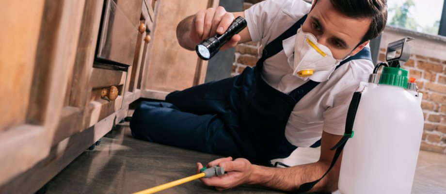3 Ways To Keep Pests Out Of Your Kitchen